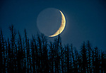 A new moon sets behind a lodgepole pine forest burned in the massive 1988 fire