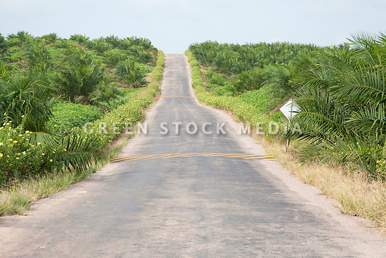 A main road on the Sindora Palm Oil Plantation. The site, owned by Kulim, is green certified by the Roundtable on Sustainable Palm Oil (RSPO) for its environmental, economic, and socially sustainable practices. Johor Bahru, Malaysia