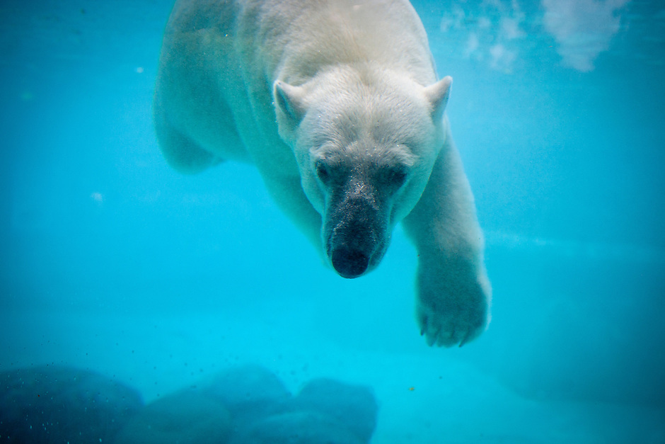 Lincoln Park Zoo – Chicago, Illinois (Photo by James Brosher)