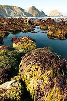 Central Coast near Willow Creek, Big Sur, California.