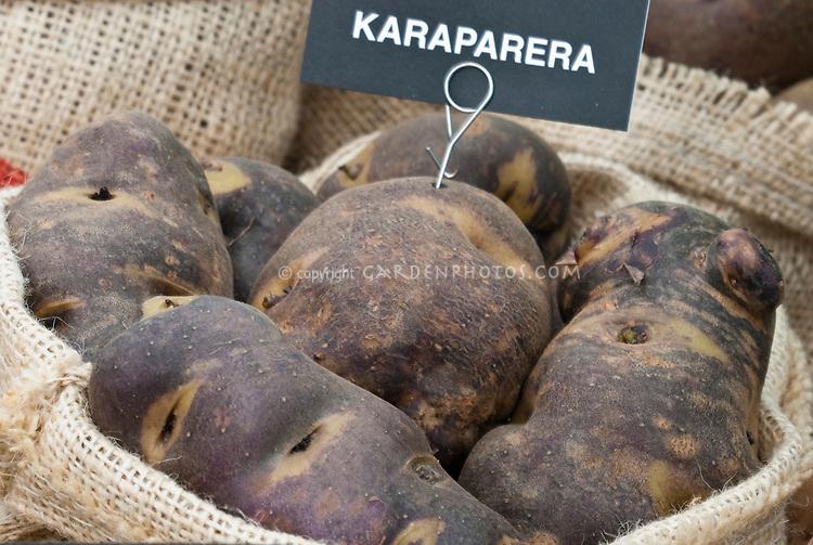 Potatoes 'Karaparera' dark mottled root vegetable with label in burlap bag