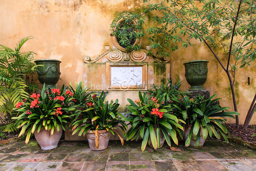 France, Alpes-Maritimes (06), Menton, jardin Serre de la Madone :.l'ancienne serre froide restaurée dont le toit et parois de verre n'ont pas été gardés..Fontaine avec pots de Clivia