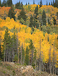 Fall colors along Bear Lake Road