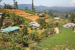 Landscape view of intensively cultivated valley sides, near Nuwara Eliya, Central Province, Sri Lanka, Asia