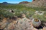 The Bajada outwash plain in Organ Pipe Cactus National Monument.