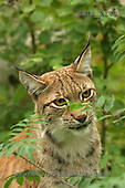 Carl, ANIMALS, wildlife, photos(SWLA2140,#A#)