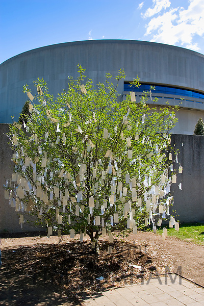 'Wish Tree for Washington D.C' by Yoko Ono at The Hirshhorn Museum and Sculpture Garden, USA