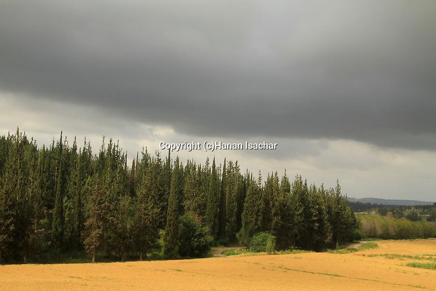 Israel, Eshtaol forest in the Shephelah