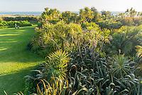 France, Manche (50), Vauville, Jardin botanique du château de Vauville, cordylines australes, palmiers et lin de Nouvelle-Zélande (Phormium tenax) forme une première barrière de protection face au vent marin (vue aérienne)