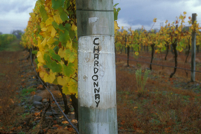 Chardonnay sign on vineyard in New Zealand