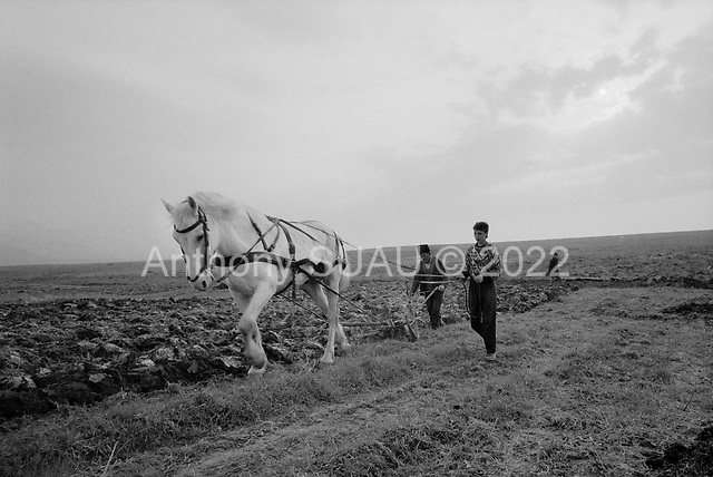 Simbata De Sus, Transylvania<br /> Romania<br /> April 25, 1992<br /> <br /> Cultivating fields