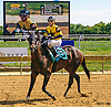 Tizthefastlaine winning at Delaware Park on 9/15/16