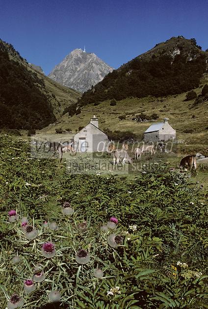 Europe/France/Midi-Pyrénées/65/Hautes-Pyrénées/Env Sainte Marie de Campan: Pic du Midi-Bigorre et vallée de Gripp, vaches à l'estive et grange d'altitude au premier plan