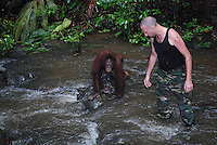 Brit, Leo Biddle, manager at the Matang Orangutan Rehabilitation Center, leads Doris through a stream as part of her training to be re-introduced to the wild.  (see text for more info)<br />