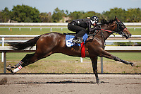 #65 fastest work 10:0Fasig-Tipton Florida Sale,Under Tack Show. Palm Meadows Florida 03-23-2012 Arron Haggart/Eclipse Sportswire.