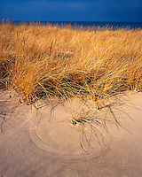 Field of grasses on the shore of Lake Michigan; Warren Dunes State Park, MI