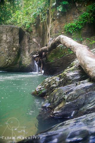 Fallen tree on rocks at Three Pools