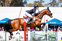 AUS-Teegan Ashby rides Waitangi Password during the Showjumping for the Horseland CCI3*-L. Final-2nd. 2019 AUS-Mitsubishi Motors Australian International 3 Day Event. Victoria Park. Adelaide. South Australia. Saturday 16 November. Copyright Photo: Libby Law Photography