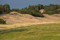 Trockenrasen, Trocken-Rasen, Binnendüne, Sanddüne, Sanddünen, nährstoffarmer, sandiger Biotop, Kiefer, Kiefern, Kiefernwald, Kieferbestände, Kiefernbestände, NSG, Naturschutzgebiet Binnendünen bei Klein Schmölen, Mecklenburg-Vorpommern, Elbtaldüne, UNESCO-Biosphärenreservat Flusslandschaft Elbe-Mecklenburg-Vorpommern