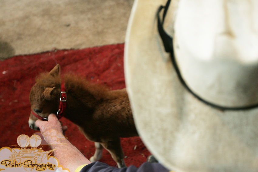 CHAD PILSTER &bull;&nbsp;Hays Daily News<br /> <br /> Marion Schmidt, the owner,  shows a recently born foal on Monday, June 3, 2013, at the Blue Sky Miniature Horse Farm in Hays, Kansas. The foal was 17 inches when it was born. Hays Rec took a group of kids out to the farm to learn about some of the smallest horses in Kansas.