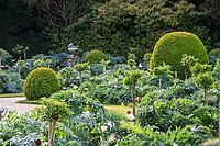 France, Indre-et-Loire (37), Chenonceaux, château et jardins de Chenonceau, jardin de Catherine de Médicis, topiaires de buis, cardons, tulipes