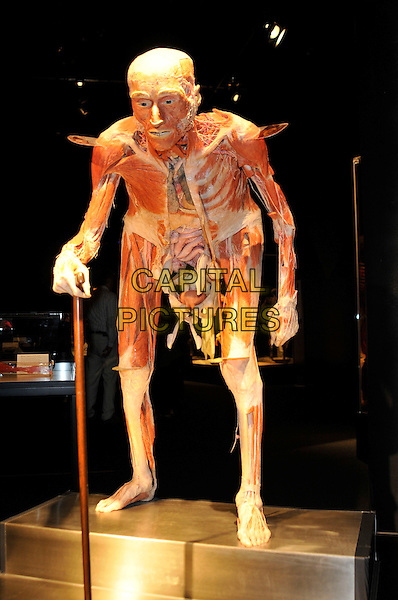 SKELETON OF AN OLD PERSON.Press conference for the new sex plastinates which is part of the Body Worlds & the Mirror of Time exhibition at the O2 Arena, Greenwich, south-east London, England..June 23rd, 2009.bodyworks body works full length muscles internal organs flesh muscle skin models bone balancing balance cane.CAP/PL.Phil Loftus/Capital Pictures.