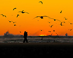 Couple walking along sandbar at sunset in Cannon Beach, OR with many seagulls flying overhead in silhouette and sun sinking into the sea with waves crashing.