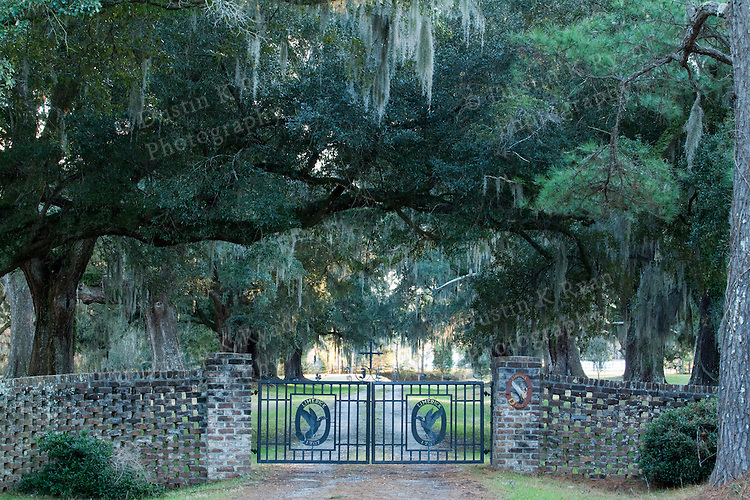 Limerick Plantation Live Oak lined Driveway near Charleston South Carolina with spanish moss hanging from the trees
