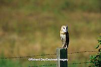 01110-00506 Common Barn-Owl (Tyto alba) on fence post  Prairie Ridge SNA Jasper Co.  IL