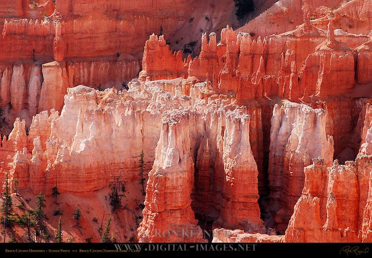 Bryce Canyon Hoodoos, Sunset Point, Bryce Canyon National Park, Utah