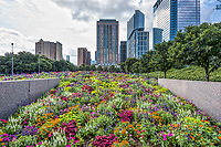 This view of the Discovery Green Park in Houston with this wonderful flower display at the entrance they seem to go on forever from here.  You can also the park and the cityscape behind the park.  This park is right in the heart of down town Houston so it is great place to come and take in the city, there are restaurants, hotels and the convention center across the street from the park so there is plenty to do.