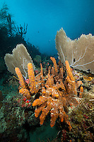 Reef Scenic<br /> Deep Angel Reef<br /> U.S. Virgin Islands
