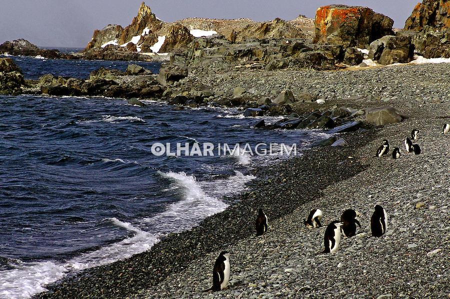 Animais pinguins na Antartida. 2006. Foto de Caio Vilela.