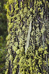 Moss covered tree trunk in the Bitterroot National Forest in Montana