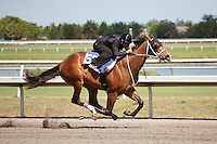 #53Fasig-Tipton Florida Sale,Under Tack Show. Palm Meadows Florida 03-23-2012 Arron Haggart/Eclipse Sportswire.