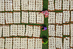 Pictured: Women in colourful robes sit among thousands of bundles of noodles.    The handmade threads are made out of rice and wheat flour and are cooked with milk and served during the holy month of Ramadan. <br /> <br /> The noodles are flipped every hour so that the strands do not become too crispy.    Photographer Abdul Momin captured the beautiful images in Bogra in Bangladesh.   SEE OUR COPY FOR DETAILS<br /> <br /> Please byline: Abdul Momin/Solent News<br /> <br /> © Abdul Momin/Solent News & Photo Agency<br /> UK +44 (0) 2380 458800