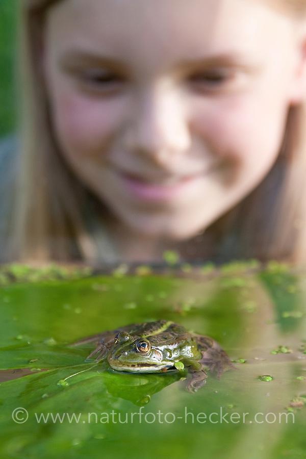 Mädchen, Kind beobachtet Teichfrosch, Teich-Frosch, Grünfrosch, Frosch, Frösche, Pelophylax esculentus, Rana kl. esculenta, European edible frog