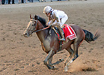 Yoshida (no. 1), wins the Woodward Stakes (Grade 1), Sep. 1, 2018 at the Saratoga Race Course, Saratoga Springs, NY.    Ridden by  Joel Rosario, and trained by William Mott,  Yoshinda finished 2 lengths in front of Gunnevera (No. 9). (Bruce Dudek/Eclipse Sportswire)