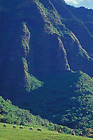 Group of people horsbackriding near large green mountain at Kualoa ranch, windward Oahu