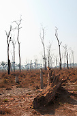Mato Grosso State, Brazil. Recently deforested area with dead trees beside the BR163 road.