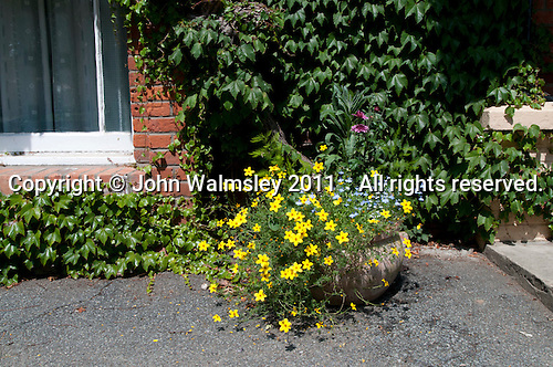 Flowers infront of the main building, Summerhill School, Leiston, Suffolk. The school was founded by A.S.Neill in 1921 and is run on democratic lines with each person, adult or child, having an equal say.  You don't have to go to lessons if you don't want to but could play all day.  It gets above average GCSE exam results.