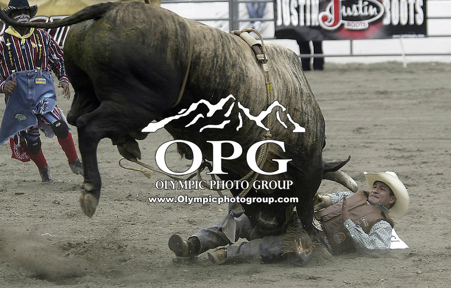 29 August, 2004: PRCA Rodeo Bull Rider Myron Duarte ranked 5th in the world riding the bull Real Deal gets tossed during the PRCA 2004 Extreme Bulls competition in Bremerton, WA. Myron won the overall competition with a cmnbined score of 176.