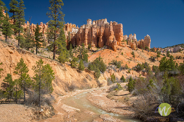 Mossy Cave, Bryce Canyon National Park. Utah. Bristlecone pine trees and stream.
