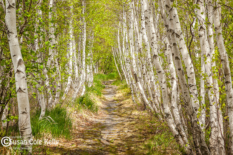 Jessup path at Sieur de Monts in Acadia National Park, Downeast, ME, USA