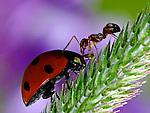 Ladybug and Ant.