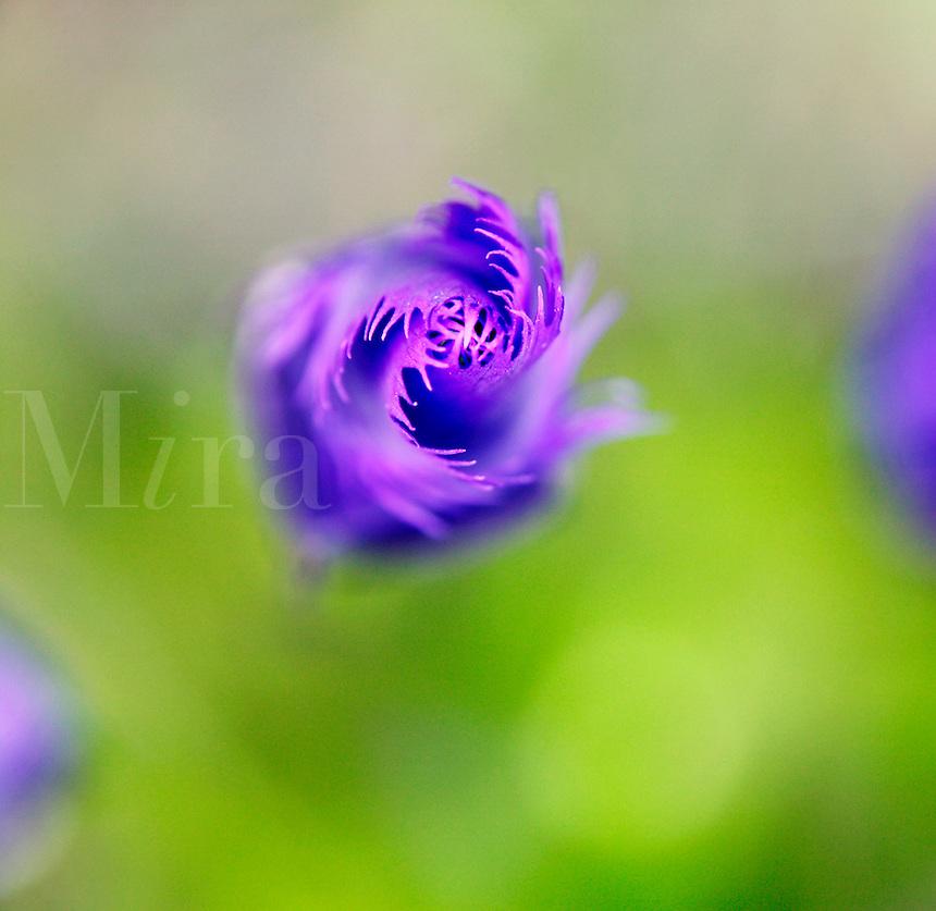 Blooming flowe