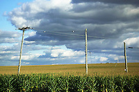 Fall Skies over Cornfield and Power Lines