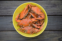 HOMOSASSA, FLORIDA, USA - AUGUST 3, 2007: Florida blue crabs harvested from the Homosassa River in Citrus County, Florida, turn bright red after being cooked. Photo by Matt May