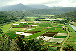 HI, Hawaii, Kauai, Hanalei Overlook with taro fields.  Photo: hikaui-ph4..Photo Copyright: Lee Foster, www.fostertravel.com, 510-549-2202, lee@fostertravel.com