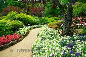Tom Mackie, FLOWERS, photos, The Sunken Garden, Butchart Gardens, Victoria, Vancouver Island, British Columbia, Canada, GBTM070308-1,#F# Garten, jardín
